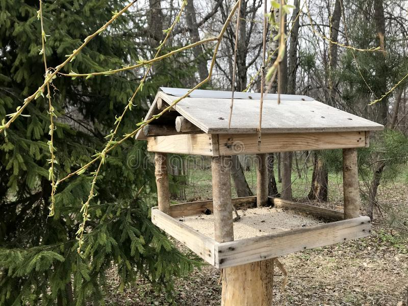 Pássaro da floresta do alimentador do pássaro na primavera no aviário foto de stock royalty free