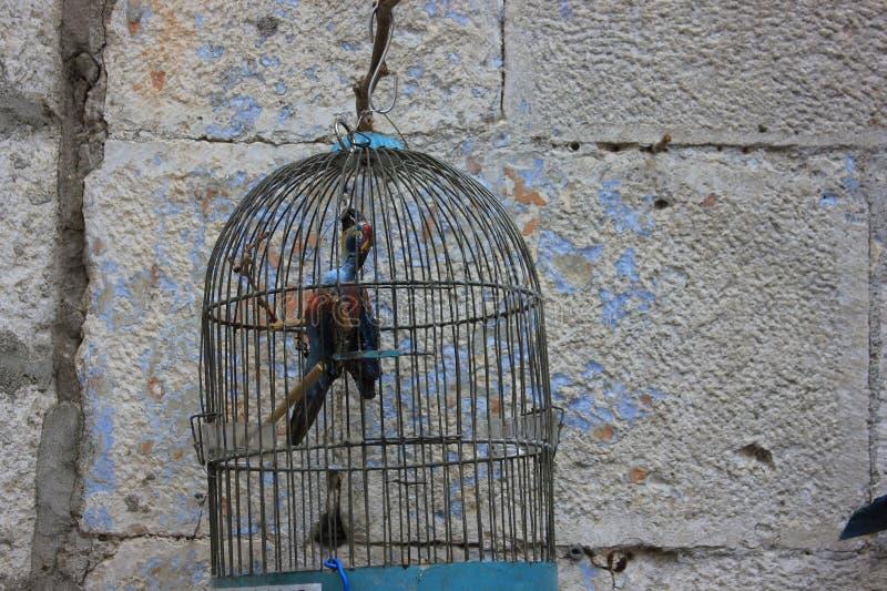 Pássaro da gaiola fotografia de stock royalty free