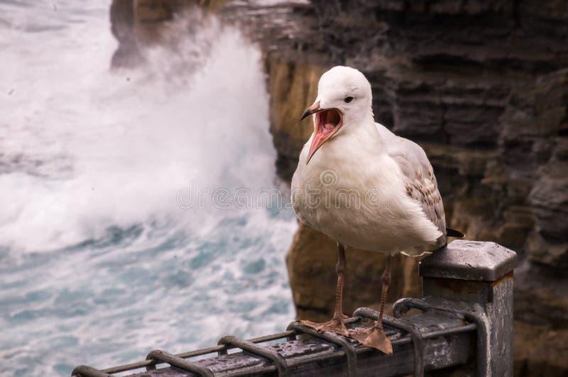 Pássaro da gaivota de mar fotografia de stock