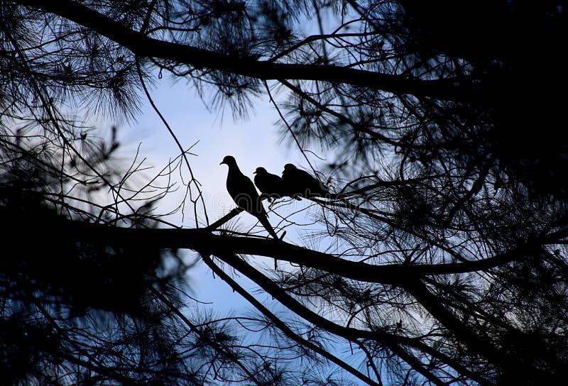 Pássaro da mamãe e dois bebês imagens de stock