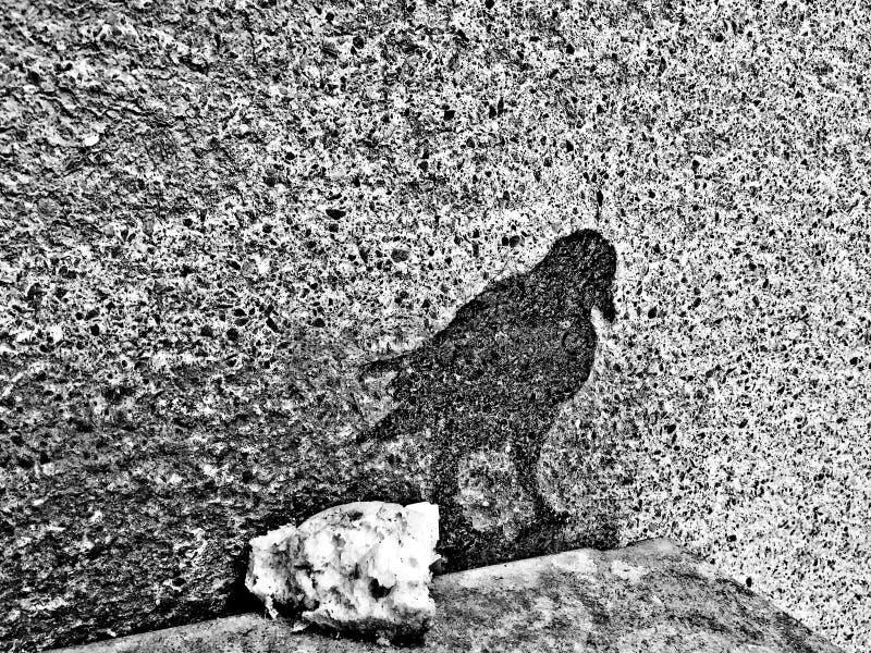 Pássaro da sombra fotos de stock royalty free
