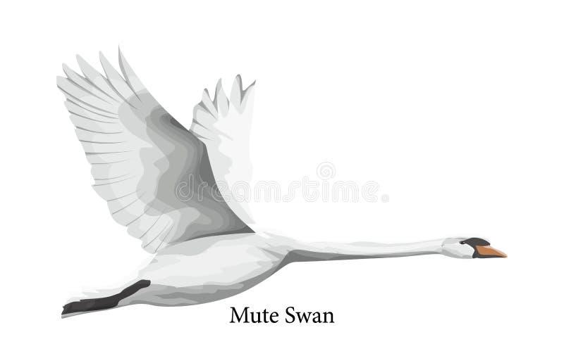 Pássaro de água branca da cisne muda nos animais selvagens ilustração royalty free