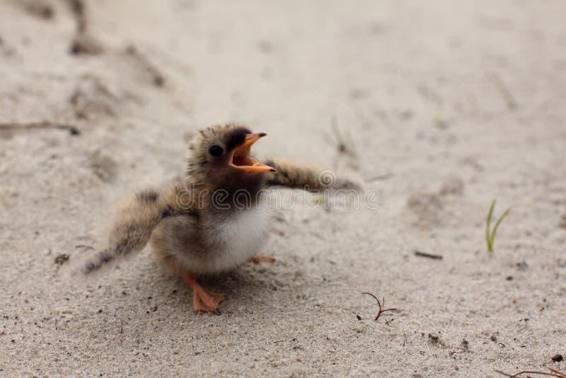 Pássaro de bebê imagem de stock