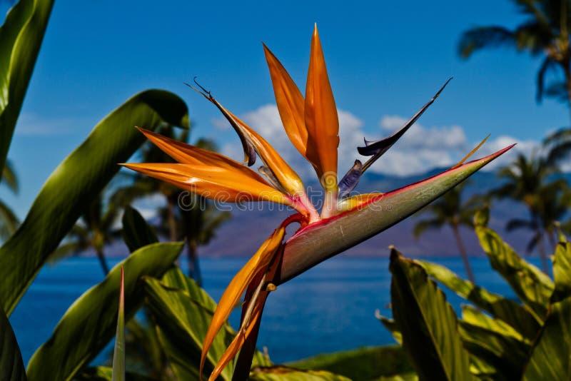 Pássaro de flores de paraíso fotografia de stock