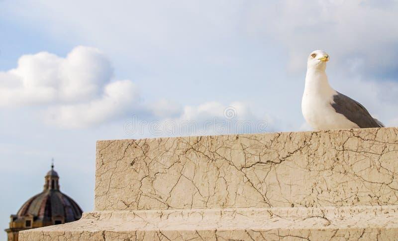 Pássaro de gaivota, Roma, Itália foto de stock royalty free