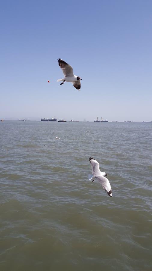 Pássaro de mar imagens de stock royalty free