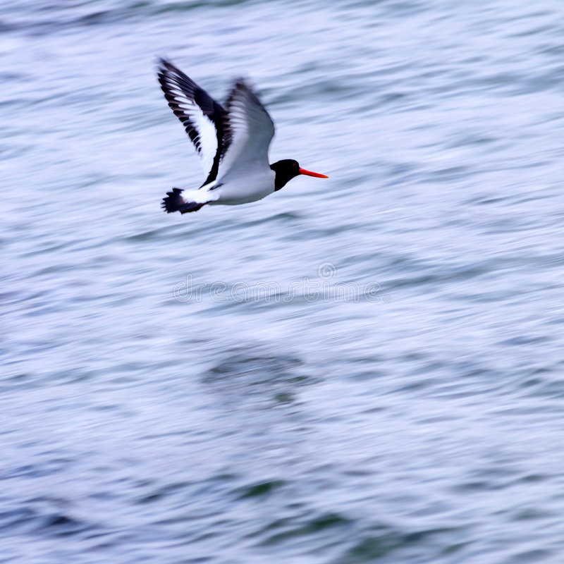 Pássaro de mar foto de stock royalty free