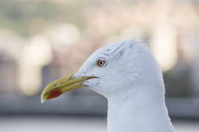 Pássaro de mar do perfil da gaivota fotos de stock