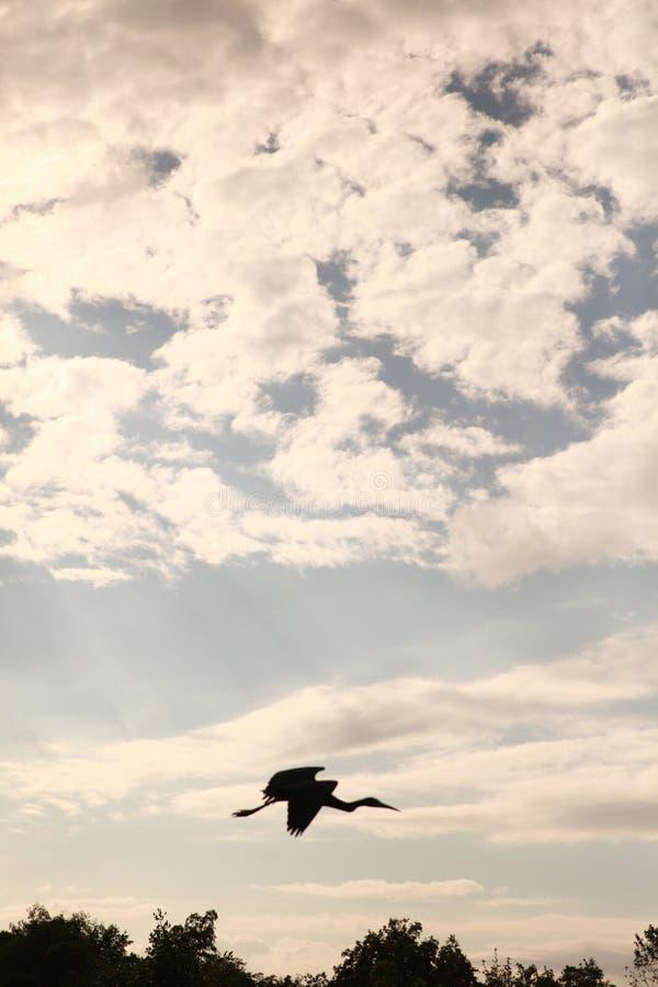 Pássaro de Trini foto de stock