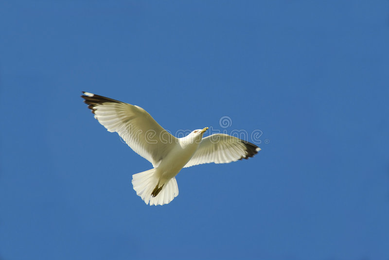 Pássaro de vôo fotografia de stock