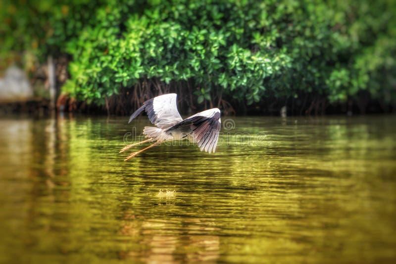 Pássaro de voo acima de um rio fotografia de stock royalty free