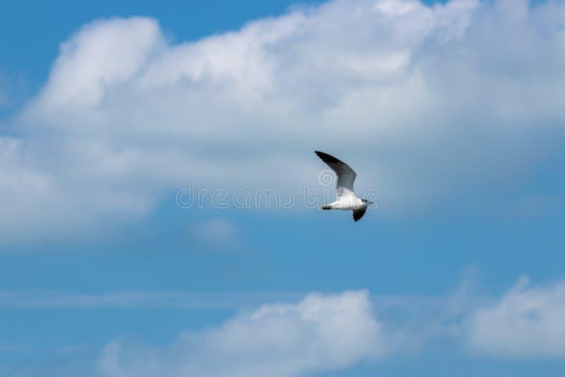 Pássaro de voo no céu fotos de stock