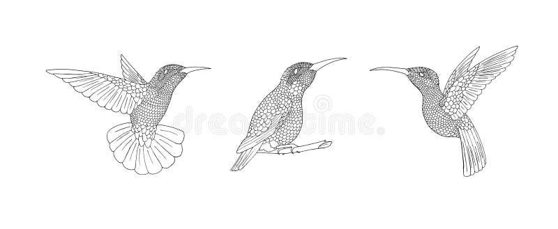 Pássaro de Zendoodle O colibri desenhado à mão com mão afoga penas da garatuja ilustração stock