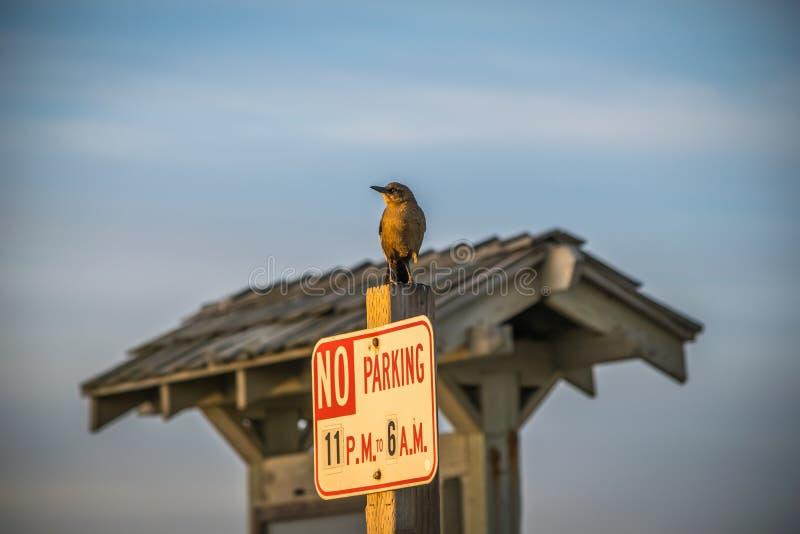 Pássaro desafiante em um sinal imagem de stock