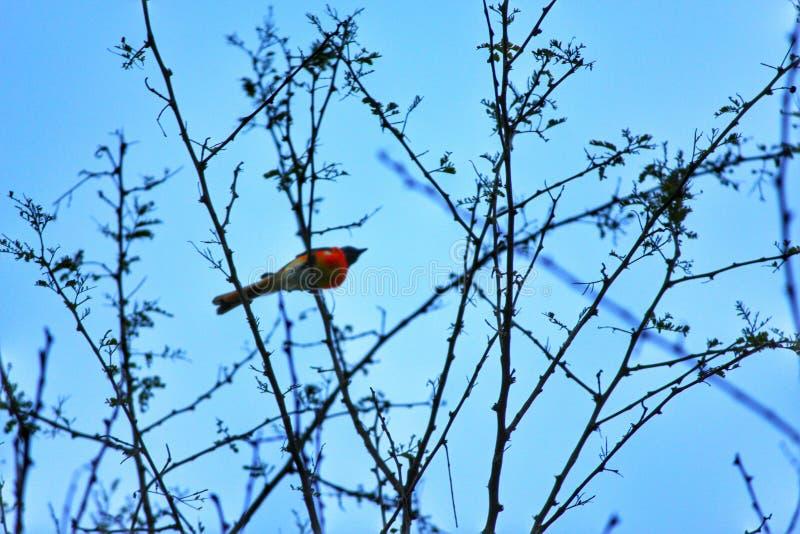 Pássaro desconhecido imagem de stock