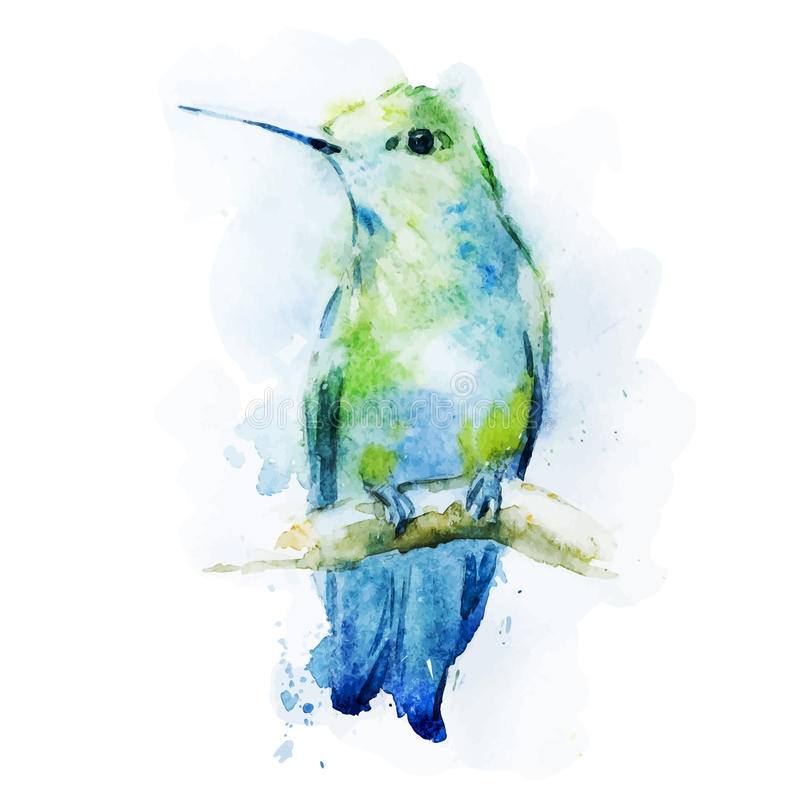 Pássaro do colibri da aquarela ilustração stock