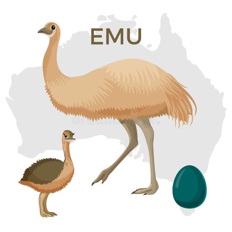 Pássaro do ema, pequeno e grande isolados no pintainho branco, pequeno ilustração do vetor