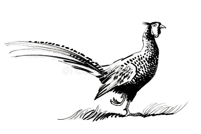 Pássaro do faisão ilustração do vetor