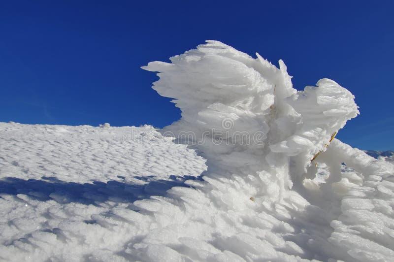 Pássaro do gelo imagem de stock