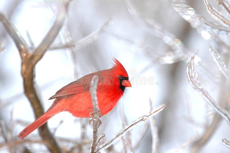Pássaro do inverno imagem de stock
