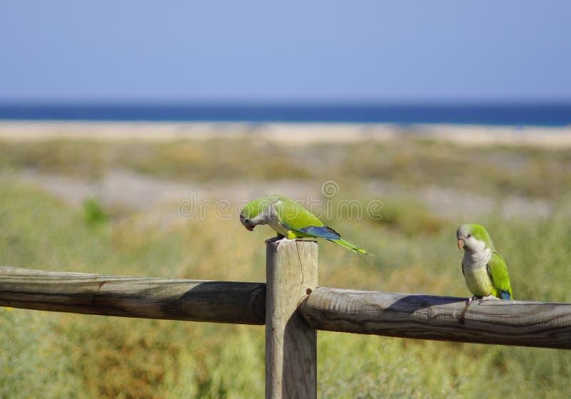 Pássaro do papagaio fotografia de stock royalty free
