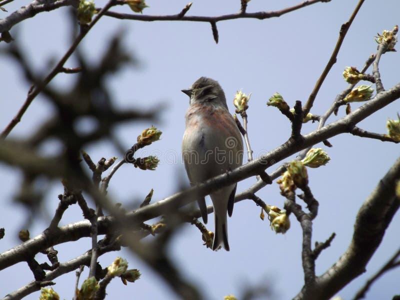 Pássaro do pardal em um ramo de árvore fotografia de stock royalty free