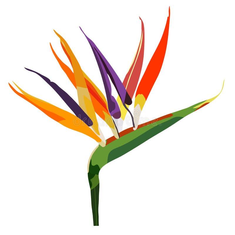 Pássaro do Strelitzia da flor de paraíso no branco imagens de stock royalty free