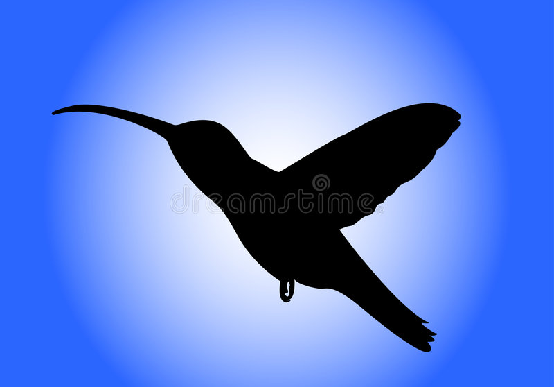 Pássaro do zumbido ilustração royalty free