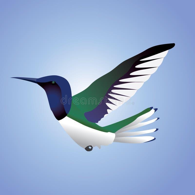 Pássaro do zumbido no vôo fotos de stock