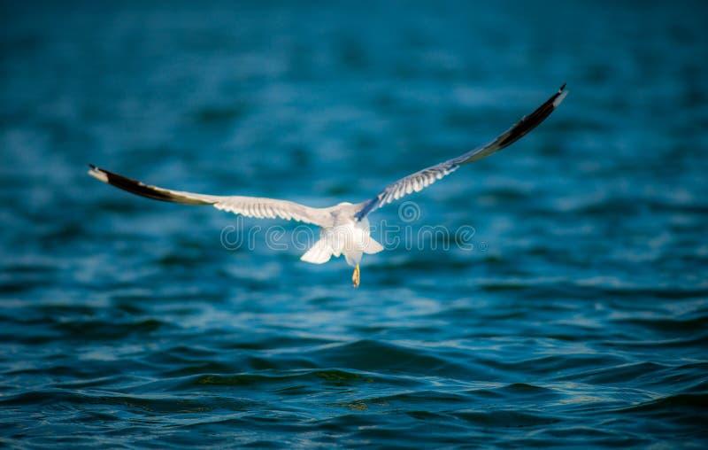 Pássaro e água foto de stock