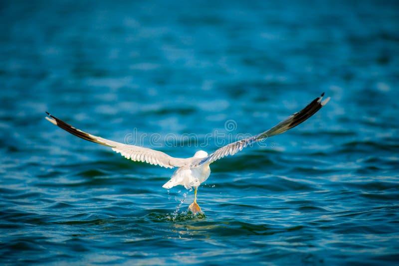 Pássaro e água imagem de stock royalty free