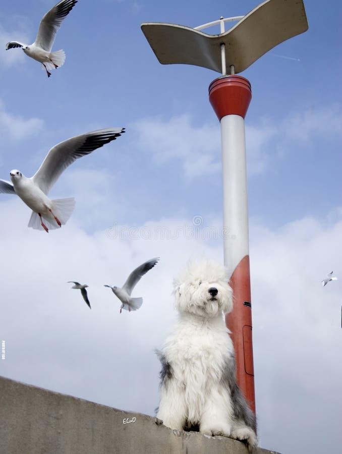 Pássaro e cão da gaivota imagem de stock