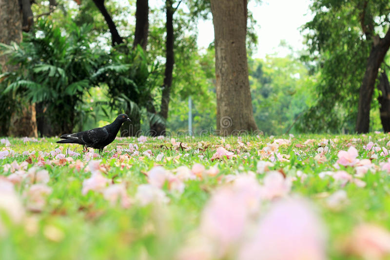 Pássaro e flores na terra em um parque público imagens de stock