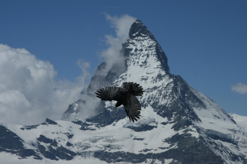 Pássaro e a montanha foto de stock