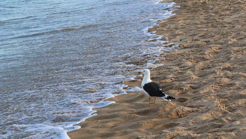 Pássaro e oceano imagem de stock