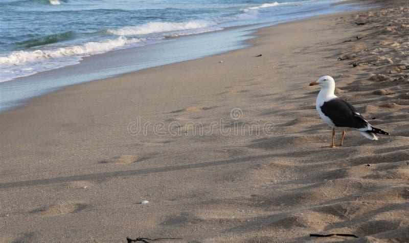 Pássaro e oceano fotos de stock