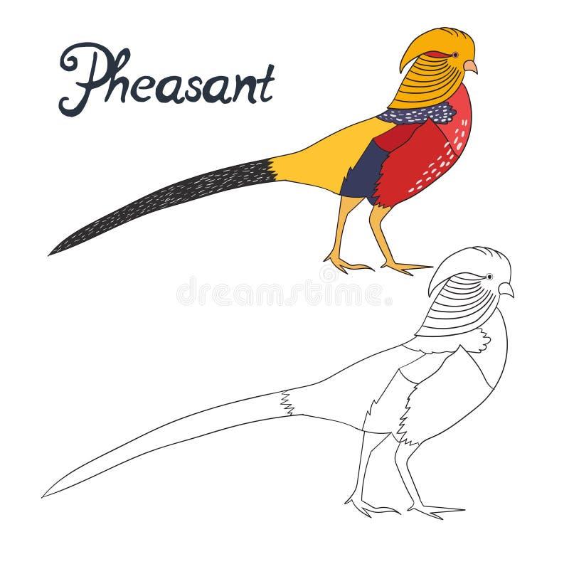 Pássaro educacional do faisão do livro para colorir do jogo ilustração royalty free