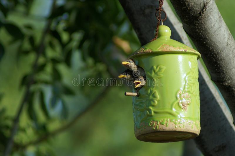 Pássaro em cores diferentes foto de stock royalty free