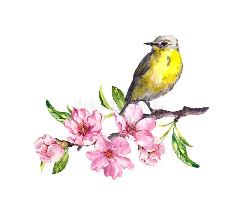 Pássaro em flores da mola Flor da primavera, cereja, maçã, ramo de sakura Cor de água ilustração stock