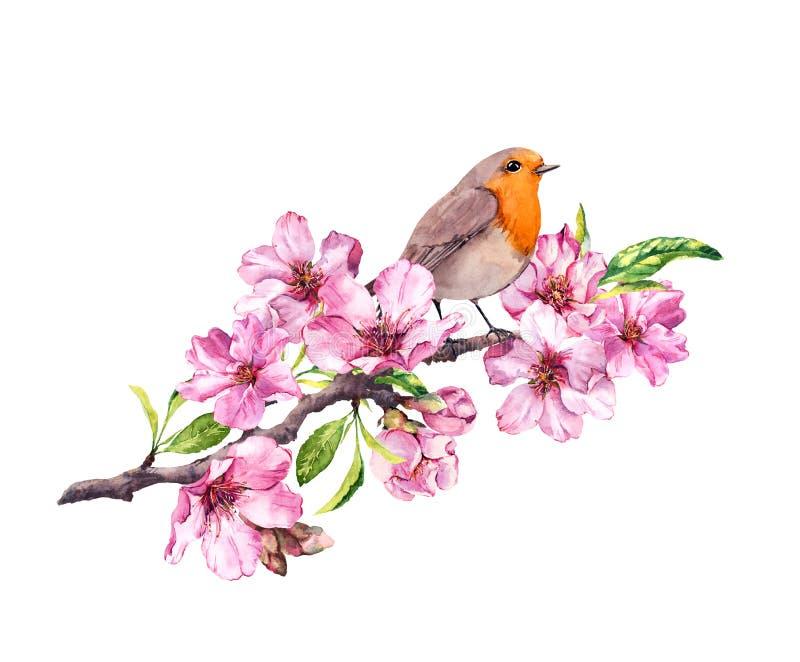 Pássaro em flores da mola Flor da primavera, cereja, maçã, ramo de sakura watercolor ilustração do vetor