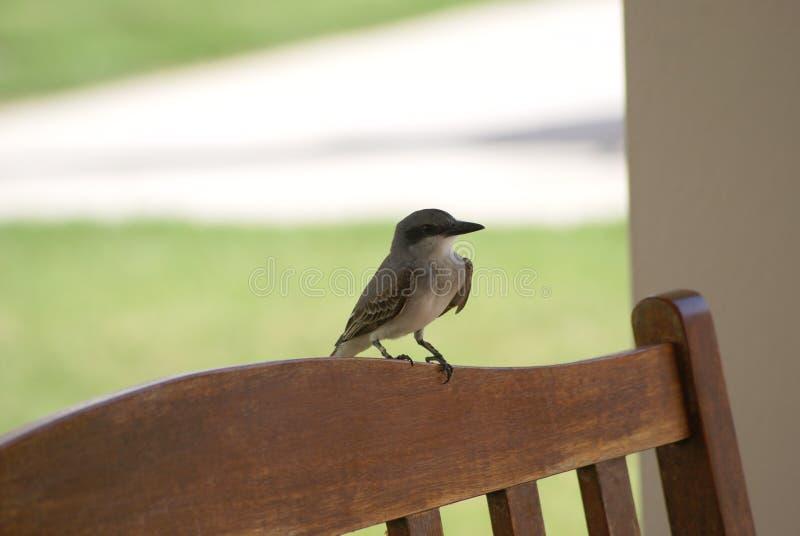 Pássaro em Porto Rico, das caraíbas imagem de stock