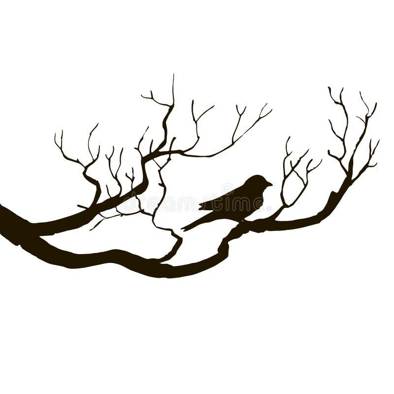 Pássaro em silhuetas da árvore ilustração do vetor