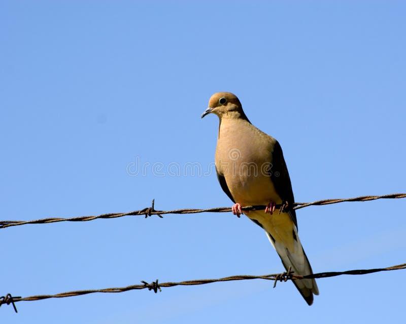 Pássaro em um fio (2) fotografia de stock royalty free