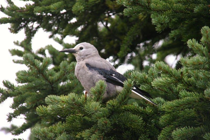 Pássaro em uma árvore fotografia de stock