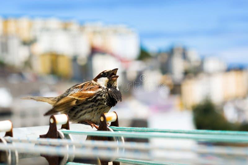 Pássaro em uma corda com fundo da cidade imagem de stock royalty free