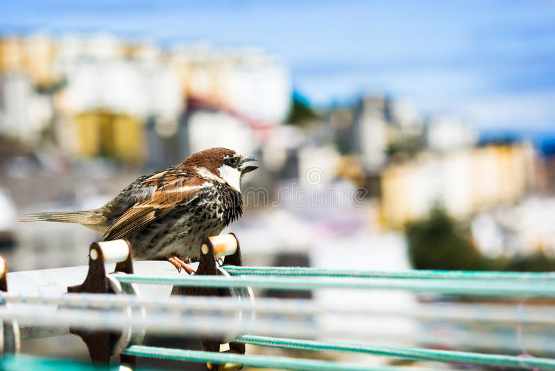 Pássaro em uma corda com fundo da cidade fotografia de stock