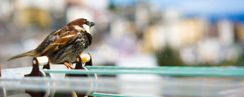 Pássaro em uma corda com fundo da cidade foto de stock royalty free