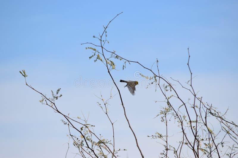 Pássaro em voo acima de uma árvore imagens de stock