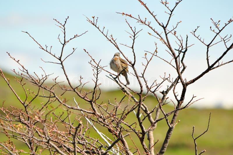 Pássaro empoleirado em uma árvore seca imagens de stock royalty free
