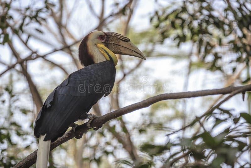 Download Pássaro Envolvido Da Conta Do Chifre Imagem de Stock - Imagem de brilhante, vermelho: 29829385
